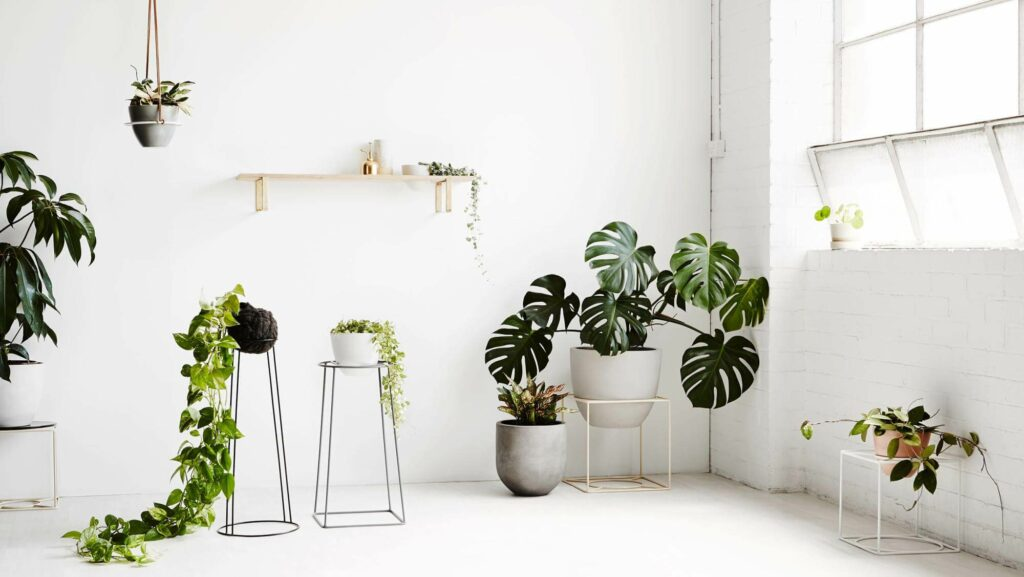 house plants decor styling interior design